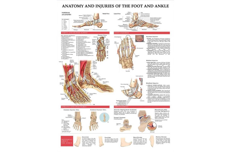 A láb és a boka sérülései 50,8x66cm