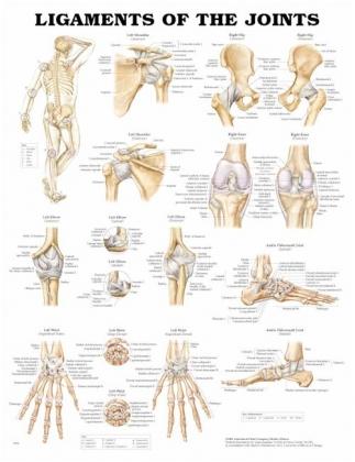 Kĺbové väzy 50,8x66cm