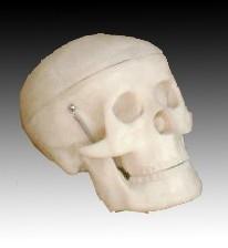 Kisméretű koponya