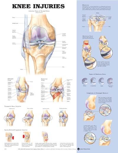Zranenia kolena 50,8x66cm