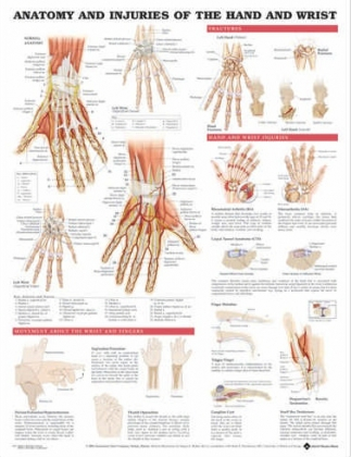 A kéz és a csukló sérülései 50,8x66cm